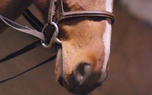 Cómo elegir el FILETE para tu caballo