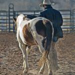 Cuidado de caballos: Necesidades, Alimentación y varios Consejos