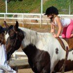 Equinoterapia : Deja que tu caballo te transmita su energía