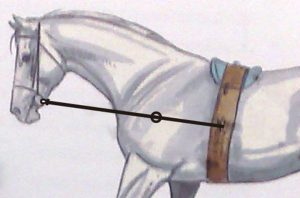 Cómo usar riendas auxiliares: martingalas, chambón, gogüe, etc.