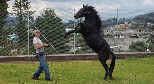 domar mi propio caballo