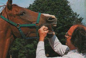 Los dientes de los caballos y su mantenimiento
