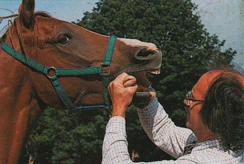 dientes de los caballos