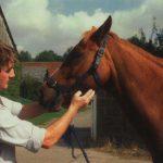 Compra de caballos: 12 claves para reconocer un buen caballo