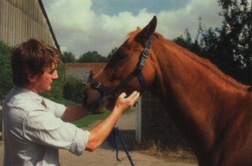 compra de caballos