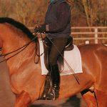 Fusta para caballo: Tipos y uso correcto en equitación