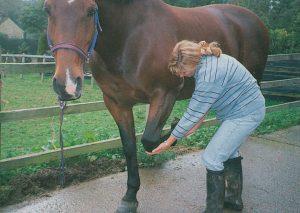 Heridas y golpes en patas de caballos: Cómo curar cortes e inflamaciones