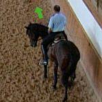 Espalda adentro: Uno de los mejores ejercicios para reunir al caballo
