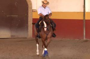 """Cómo hacer """"apoyos"""" a caballo: 10 consejos prácticos"""