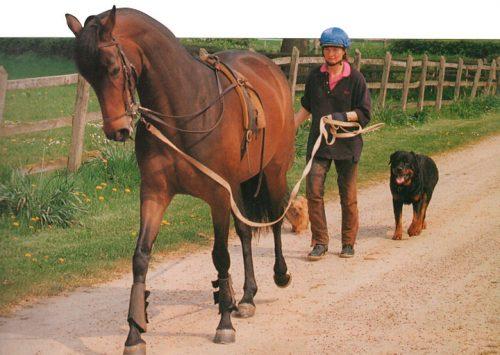 Cómo trabajar un caballo con Riendas Largas o Doble Cuerda