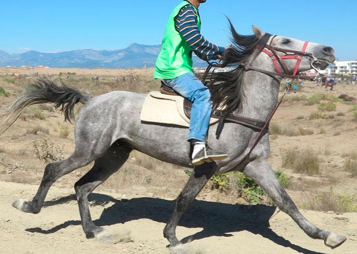 como montar un caballo