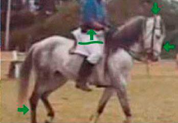colocación correcta del caballo