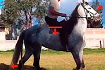 caballo que invierte su cuello