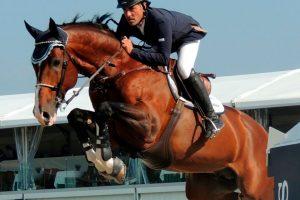 Salto Ecuestre: Cómo preparar un caballo de concurso (fase inicial)