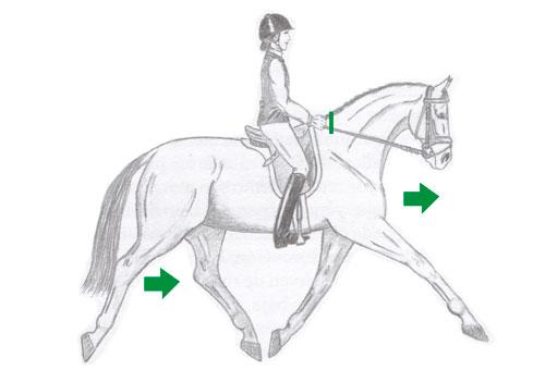 impulsión del caballo