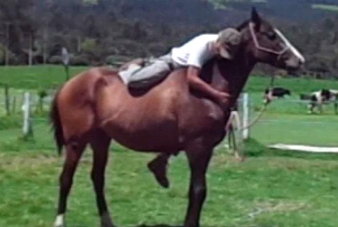 caballos resabiados