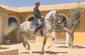 La reunión: ¿Cuándo y cómo reunir al caballo?
