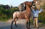 """Un caballo nervioso es una """"bomba de tiempo"""": Cómo tranquilizarlo"""