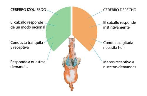 etología equina
