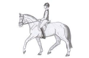 Cómo hacer la Media Parada, la Parada y Paso Atrás en Equitación