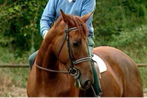 La flexibilidad del caballo: Ejercicios para tener un caballo flexible