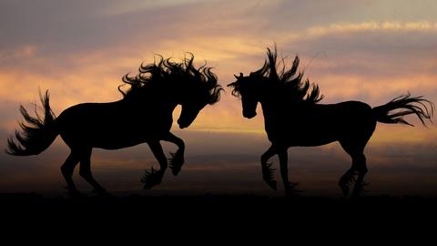 lenguaje corporal de los caballos