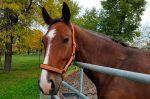 Psicología equina: El comportamiento del caballo en estado doméstico