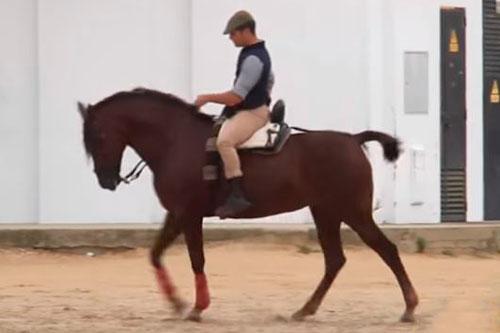 La sumisión del caballo: Cómo lograr la obediencia  absoluta