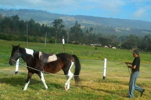 Cómo corregir mañas y vicios de caballos: Método de re-doma