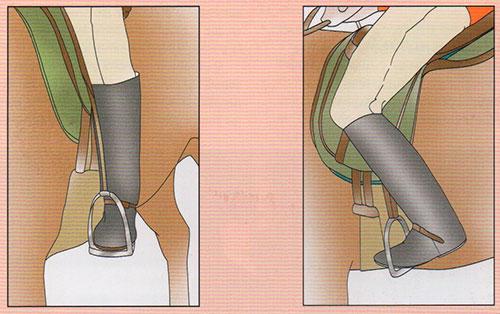 acción de las piernas en equitación