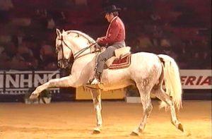 Cómo enseñar Paso Español a mi caballo: Definición y Método
