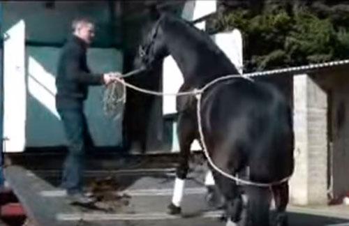 subir un caballo al remolque