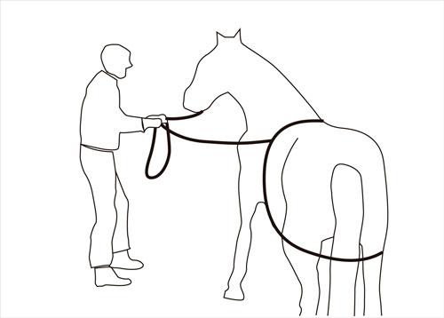 cuerda para subir caballo a remolque