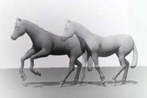 Las transiciones en equitación: Cómo pasar de un aire a otro, correctamente
