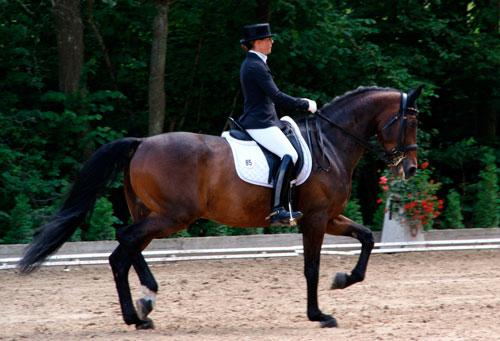 doma clásica de caballos