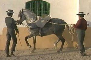 El Piaffe: Cómo enseñar a Piafar a mi caballo
