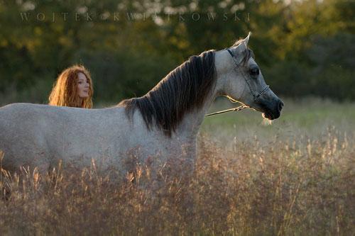 caballos árabes