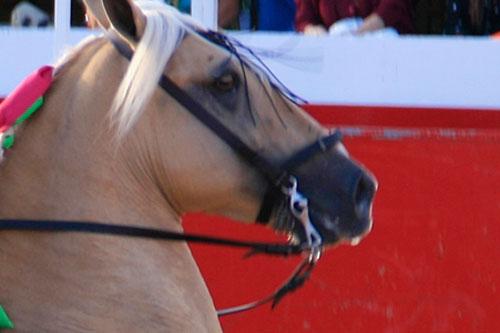 bocados para caballos