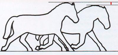 Forma de ver cojeras en caballos