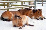 Cómo Duermen Los Caballos: El Ritmo del Sueño