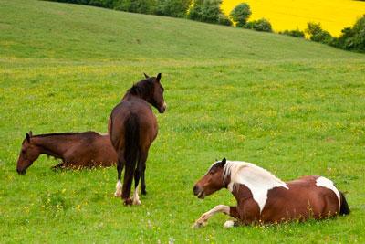 caballos rotando la guardia para descansar