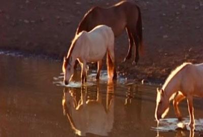 caballos salvajes en un manantial