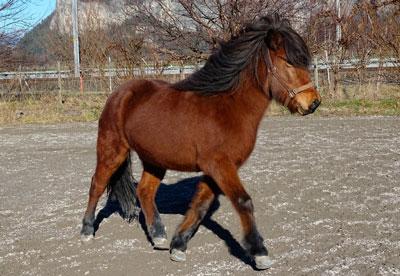 caballo tipo poni