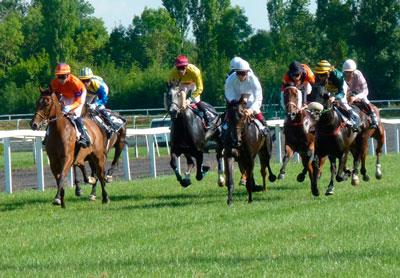 carreras de caballos sobre cesped