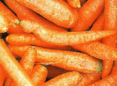 zanahoria para caballos