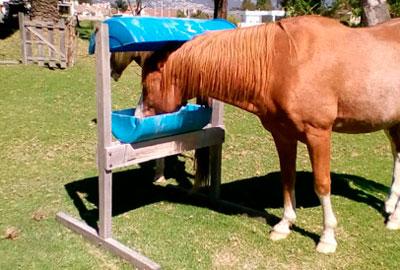 salero para alimentar caballos