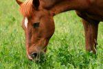 ¿Qué comen los caballos?: Consejos para mantener el peso ideal