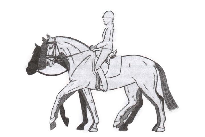 caballo en la mano