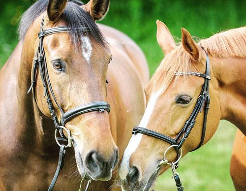 productos para caballos