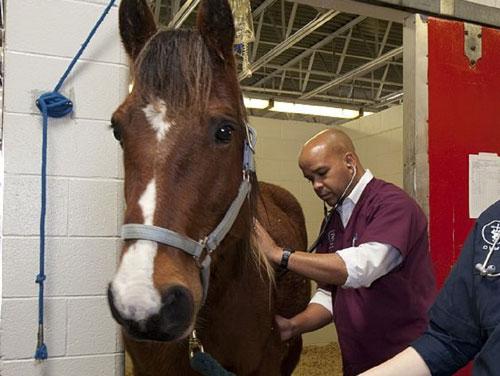 venta de comida de caballos y productos de uso veterinario